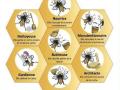 Les 7 métiers de l'abeille