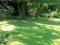 Filaires taillés en topiaire du parc du château