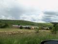 Passage d'un troupeau de moutons