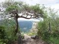 Un autre arbre tortueux