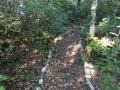Vers la sortie du sentier botanique