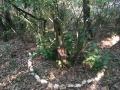 Danse des pierres autour de l'olivier aux escargots
