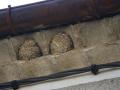 Nids entiers et trace de nid