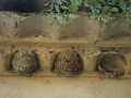 2 nids entiers dont 1 réparé et 1 trace de nid
