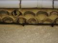 Nids entiers occupés et traces de nids