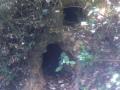 Terriers de blaireaux