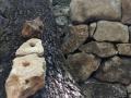 Les pierres trouées grimpent sur le tronc