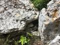 Plaquettes de fermeture du Dolmen de Piécourt
