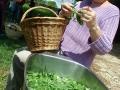 Laveuse de salades