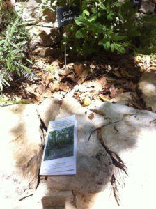 Le sentier botanique d'Arpaillargues