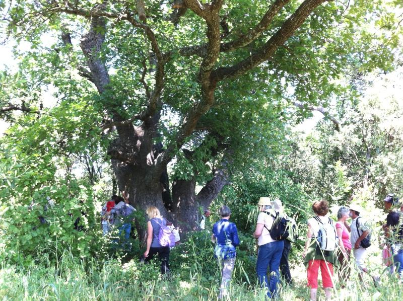 A la découverte des arbres remarquables