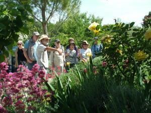Visite d'une roseraie à Arpaillargues