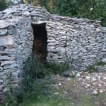 Capitelle de l'érable, logée dans le coin du mur d'enclos