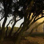 Le moulin apparaît derrière les chênes