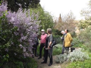 En admiration devant un lilas de Perse