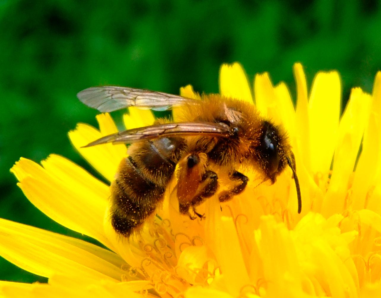 18 février 2020- L'abeille, la ruche, l'apiculteur